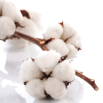 What Is Fiber Maturity & What Factors Work Behind To Fiber Maturity In Textile